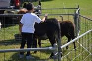 boy w donkey