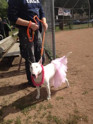 dog with pink tutu (2)